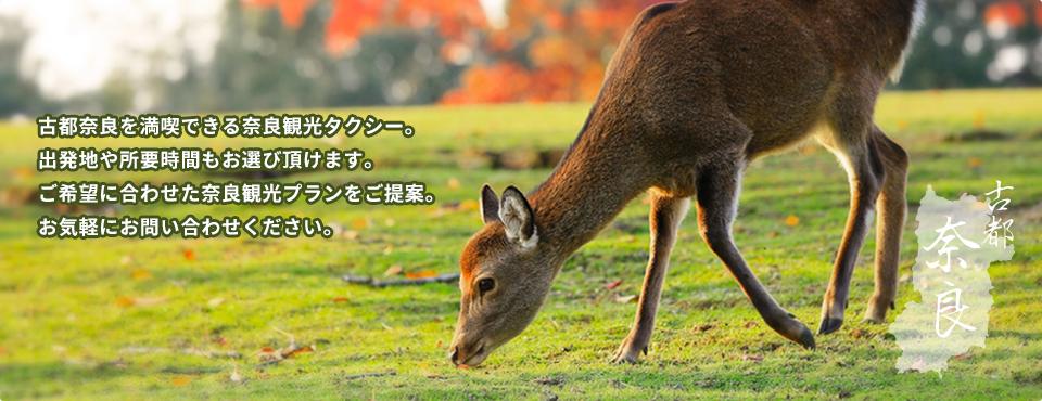 古都奈良を満喫できる奈良観光タクシー。出発地や所要時間もお選びいただけます。お客様のご希望に合わせた奈良観光プランをご提案します。