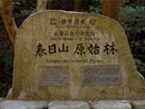 奈良市内世界遺産満喫