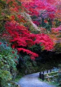 【季節限定】大和路の紅葉