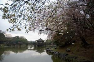 奈良公園コース